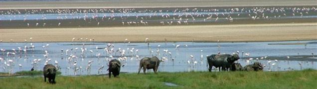 Safari Tanzanie Lac Manyara