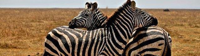 Conseils safari Tanzanie