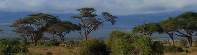 Meilleure période pour partir en Tanzanie