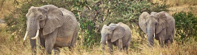 Prix d'un safari en Tanzanie