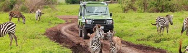 Quel safari en Tanzanie ?